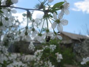 Идет весна, весна, весна